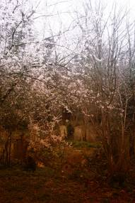Tower Hamlet cemetery